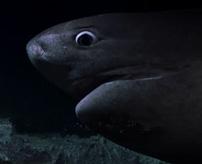 まるでパニック映画!暗闇の海底でサメの攻撃に遭うドキュメンタリー映像
