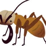 昆虫界最強?牛などの大型動物も捕食するグンタイアリに密着