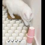 安定感が半端ない!ネコの運動神経が分かる能力テスト
