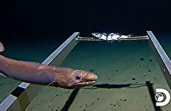世界最深!エベレストをひっくり返しても底につかないマリアナ海溝に潜ってみた